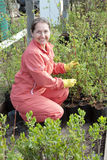 Mature woman with sprouts. In pots  at plant Stock Image