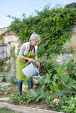 Mature woman taking care of garden Stock Photos