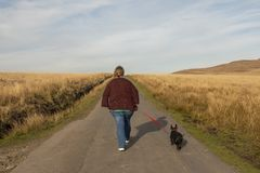 Mature woman and terrier dog walking. On a mountain road stock photos