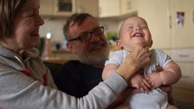 Mature woman tickles baby. A child laughs showing his white milk teeth. Grandpa and Grandma Nurse Grandson