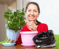 Mature woman transplants potted flower Royalty Free Stock Photo