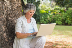 Mature woman typing something into a laptop sitting on tree trun. K in the park on sunny day Royalty Free Stock Photo