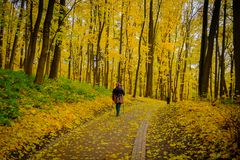 Mature woman walking Nordic Walk in a park Royalty Free Stock Images