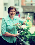 Mature woman with watering-can taking care of plants Stock Images