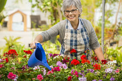 Mature woman watering flowers stock images