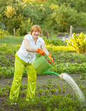Mature woman watering plant Stock Photos