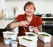 Mature woman watering sprouts Stock Images