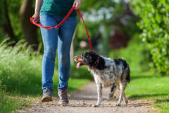 Free Mature Woman With Brittany Dog At The Leash Stock Photography - 93843892