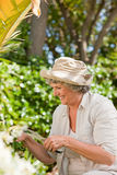 Mature woman working Royalty Free Stock Image