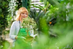 Mature woman working in a botanical garden.  stock photo