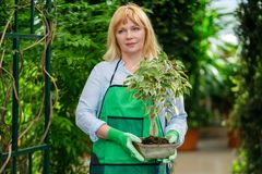 Mature woman working in a botanical garden.  stock images