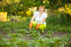 Mature woman working in field Stock Photos