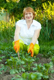 Mature woman working in garden Royalty Free Stock Image