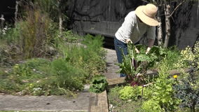 Mature woman working in the garden stock footage