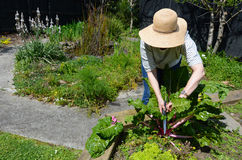 Mature woman working in the garden Royalty Free Stock Photo