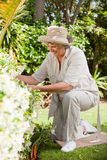 Mature woman working in her garden Royalty Free Stock Photo