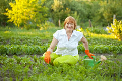 Mature woman working in  vegetable garden Royalty Free Stock Image
