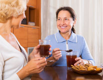 Mature women having tea break. Smiling mature women having tea break at office Royalty Free Stock Image