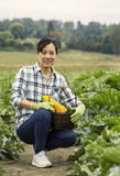 Mature women kneeling in vegetable Garden Stock Photos
