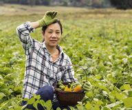 Mature women resting from harvesting green beans Royalty Free Stock Photos