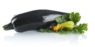 Mature zucchini with convoluted flower and leaf on white Stock Photography