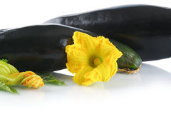 Mature zucchinis with flowers on white background Stock Photo