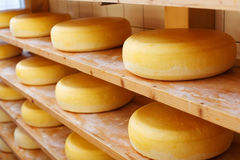 Matured cheese-wheels on shelves Royalty Free Stock Photo