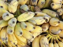 Maturi le banane Fotografie Stock Libere da Diritti