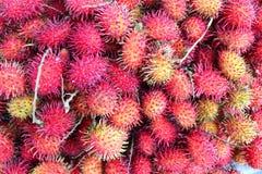 Maturi rossi aspettano ai frutti della mela Immagini Stock Libere da Diritti
