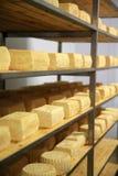 Maturing cheese storehouse Stock Image