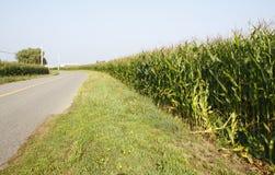 Maturing Cornfields Stock Photography