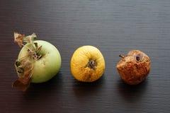 Maturité de Diffent de pomme images stock
