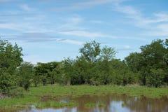 Matusadona Nationaal Park na zware regenval Stock Foto