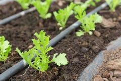 Matväxt på organiskt lantbruk arkivbilder
