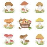Matvaran plocka svamp den realistiska teckningsuppsättningen Arkivbilder