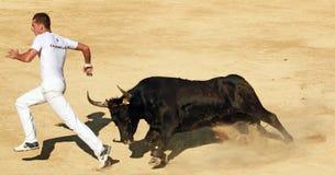 MAUGUIO,法国- 8月19 : 公牛赛跑 库存照片
