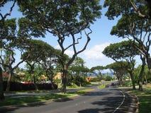 Maui árvore-alinhou a vizinhança residencial Fotos de Stock