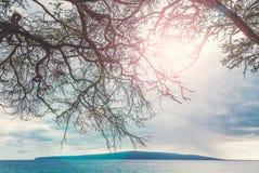 Maui Στοκ φωτογραφίες με δικαίωμα ελεύθερης χρήσης