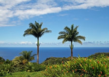 Maui. Two palmtrees in front of the ocean Stock Photos