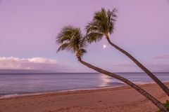 Maui Beach and Full Moon at Sunrise. Palm trees and full moon on a Maui beach at sunrise Royalty Free Stock Photography