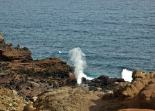 Maui Blowhole Royalty Free Stock Image