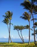 Maui drzewka palmowe, Hawaje Zdjęcie Stock