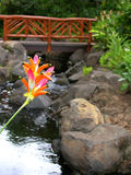 Maui Flower. Hawaiian flower over stream with bridge background Stock Photography