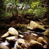 Maui fresh water stream Stock Photography