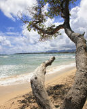 Maui Havaí pitoresco Fotografia de Stock Royalty Free