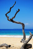 Maui Hawaï images libres de droits