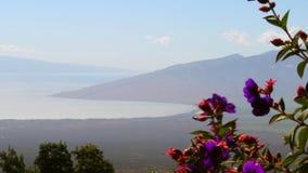 Maui, Hawaï, tropische bloemen en oceaanmening van de heuvel stock footage