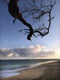Maui Hawaii beach with branch Royalty Free Stock Images