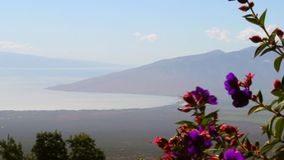 Maui, Hawaii, tropische Blumen und Meerblick vom Hügel stock footage