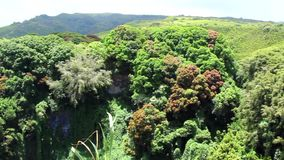 Maui, Hawaii, tropische Blumen und Wasserfallansicht vom Hügel stock video